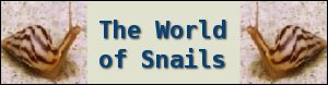World of Snails banner