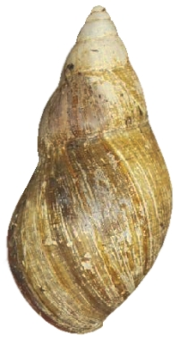Small-form shell