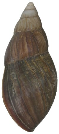 Small-form shell side